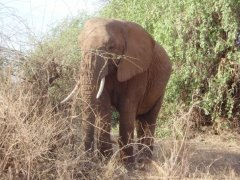 An elephant I photographed in Kenya 2008